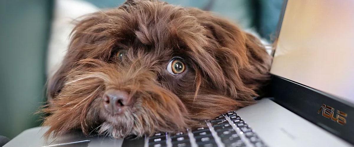 Controllare il vostro cane con una telecamera WiFi