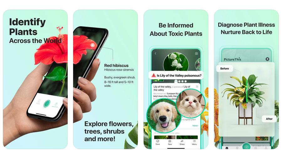 App per riconoscere piante e fiori con lo smartphone